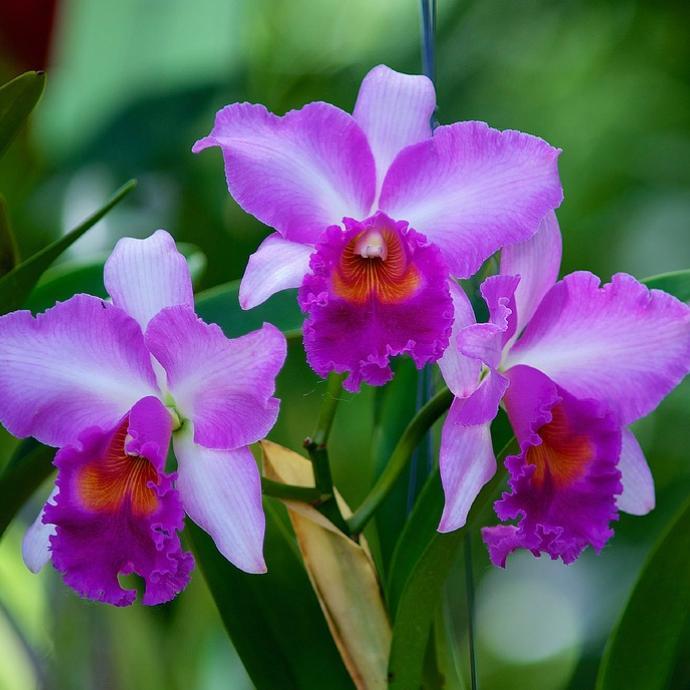 Mille & une orchidées