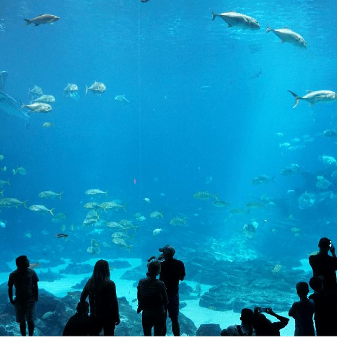 The Aquarium of Paris