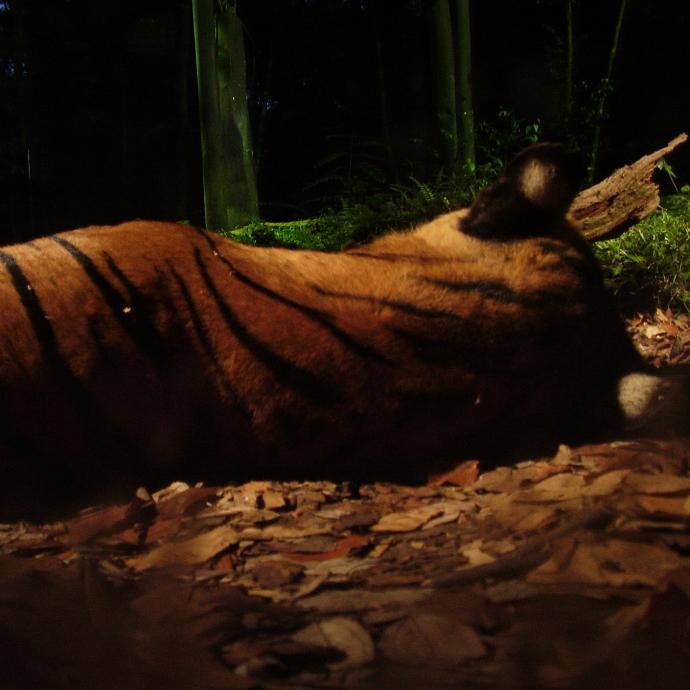 Nocturnes at the Zoological Park of Paris